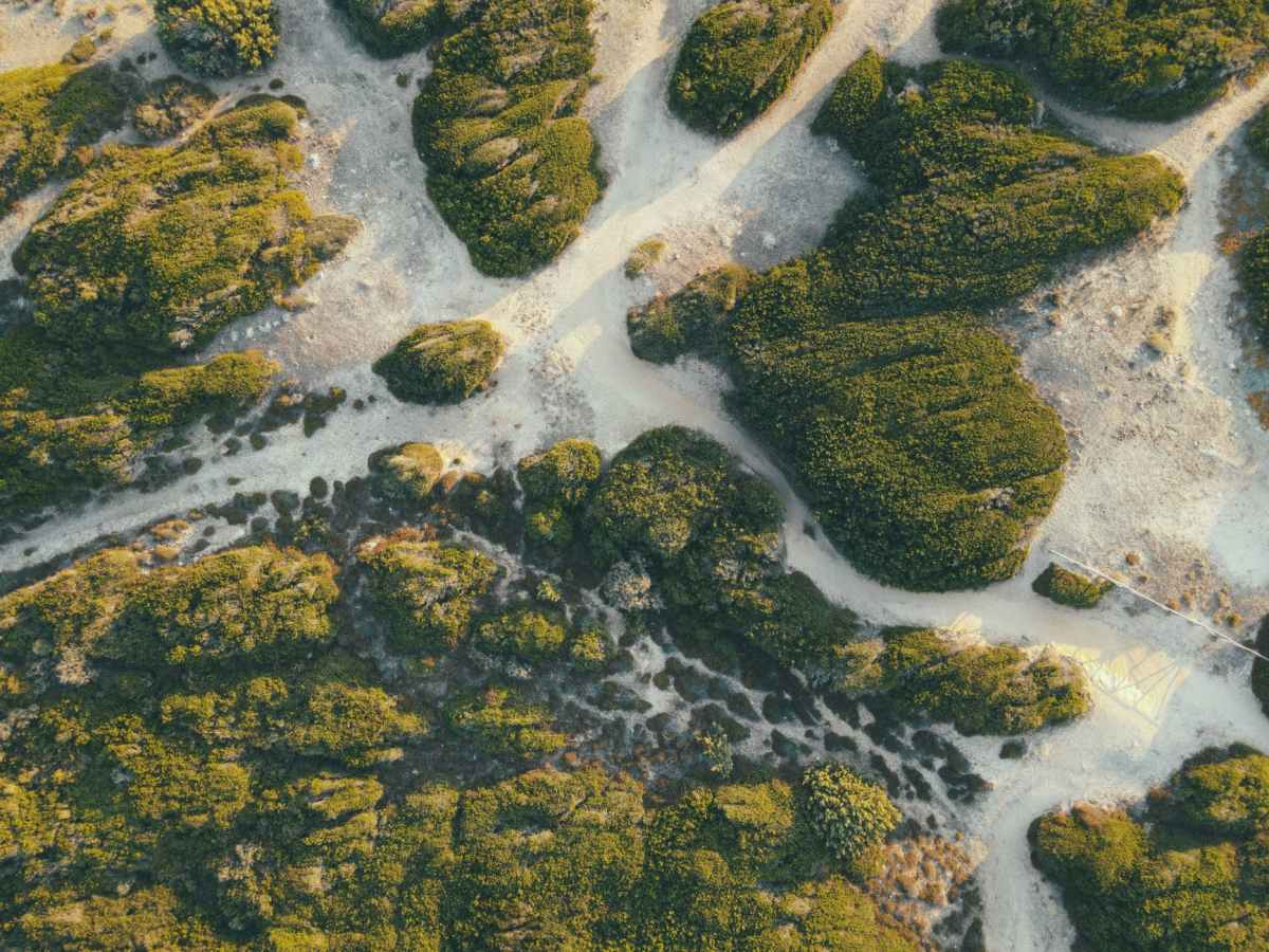 abstract background of sandy terrain with green plants